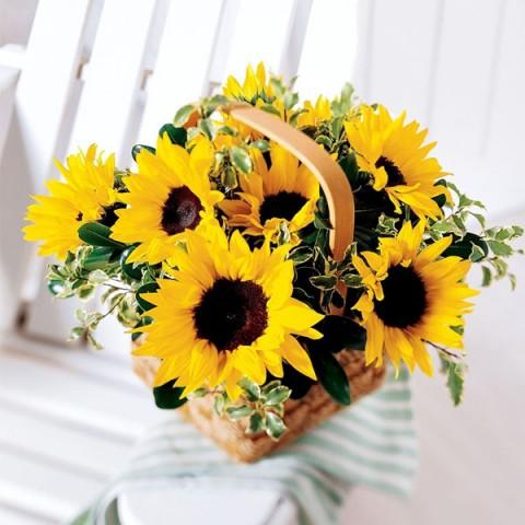 Bloom in a basket