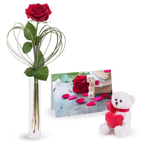Love Combo: Red Rose and Tedd