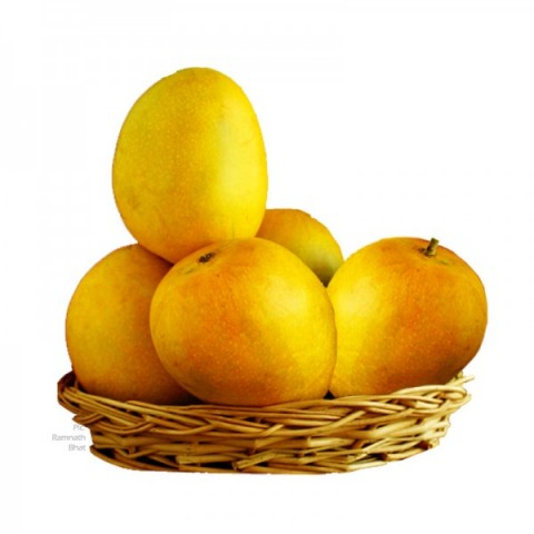 Mangoes for You