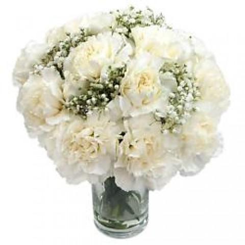 Simple White Carnation