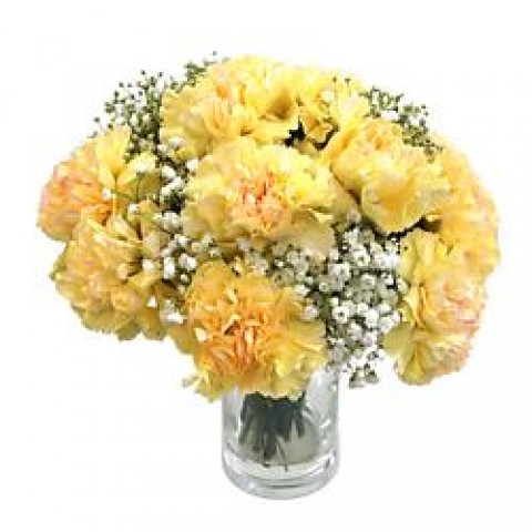Pretty Yellow Carnation
