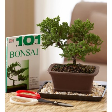 Bonsai Begnner's Set