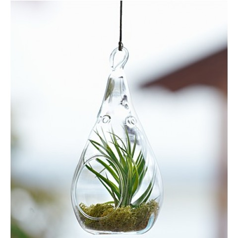 Airplant Glass