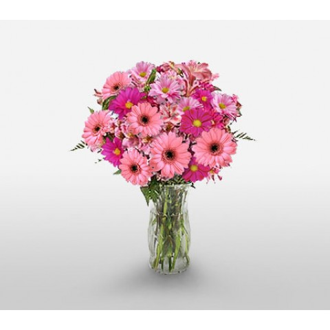 Lovely Pink Gerberas