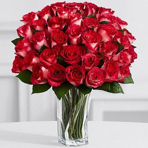 Rosy Velvet Roses