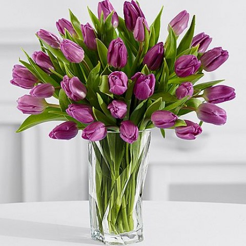 24 Stunning Purple Tulips