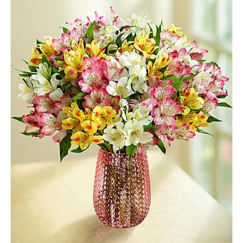 Spring Peruvian Lilies