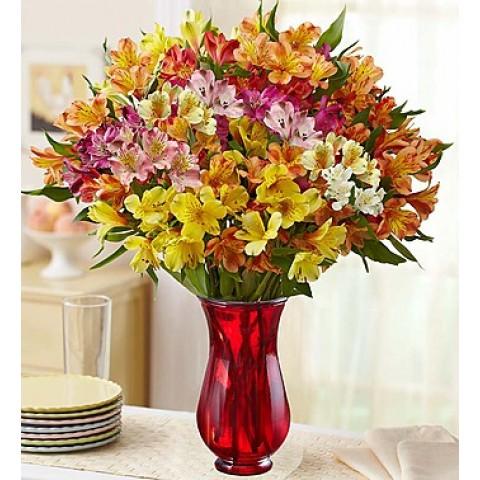 Jewel-toned lilies
