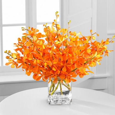 Vibrant orange orchid