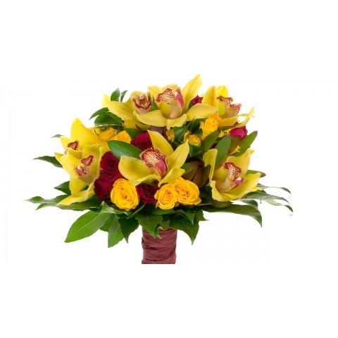 Sunburst Orchid