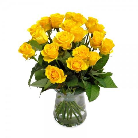Yellow Rose Surprise