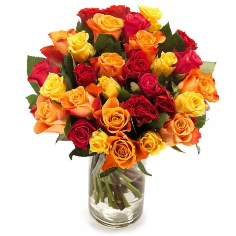 Fireball Roses