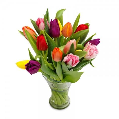 Tulips of Romance