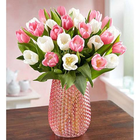 Sweet Spring Tulips